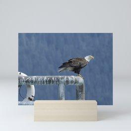 Bald Eagle of Resurrection Bay, No. 3 Mini Art Print