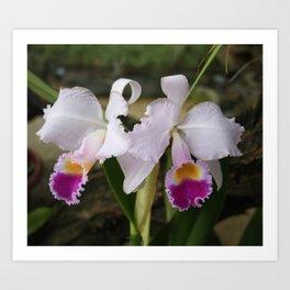 Tropical Flowers Orchids Art Print