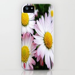 Three white and pink daisies iPhone Case