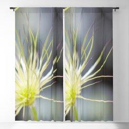 Dandelion Macro Close Up Blackout Curtain