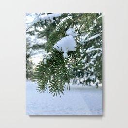 Pine Tree Metal Print