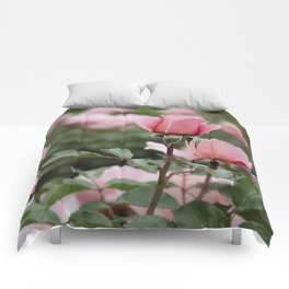 Never-ending roses Comforters
