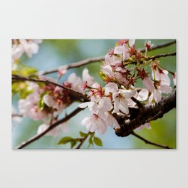 Bloom Bloom Bloom Canvas Print