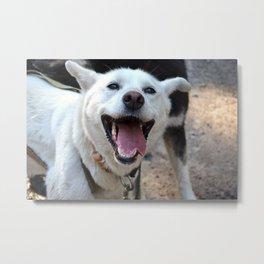 Sled Dog Metal Print