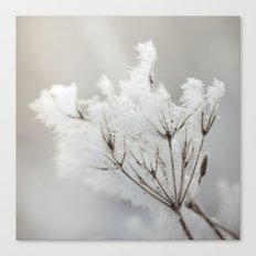 Winter macro Canvas Print