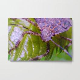 Marmorated Stink Bug. Macro Photograph Metal Print