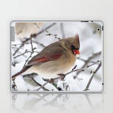 Female Cardinal Laptop & iPad Skin