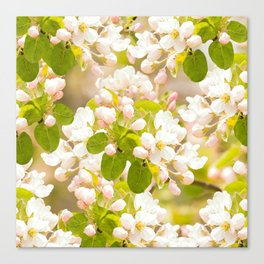 Apple tree branches with lovely flowers and buds on a pastel green background Canvas Print