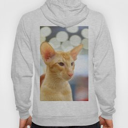 Young red oriental cat Hoody