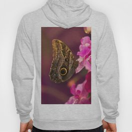 Blue Morpho butterly on pink flowers Hoody