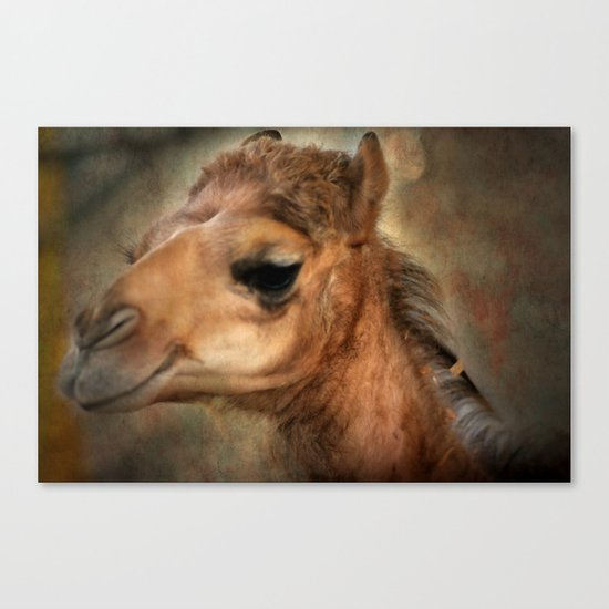The Camel's Secret Canvas Print