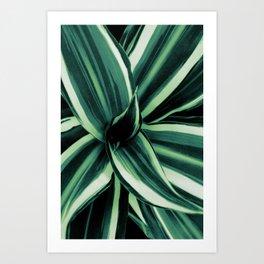 White Jewel - Dracaena Delight #2 #tropical #decor #art #society6 Art Print