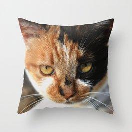 Tortoiseshell and White Calico Cat Throw Pillow