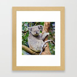 Australian Koala Bear Photo Framed Art Print