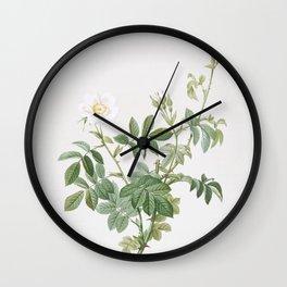 Vintage White Downy Rose Illustration Wall Clock