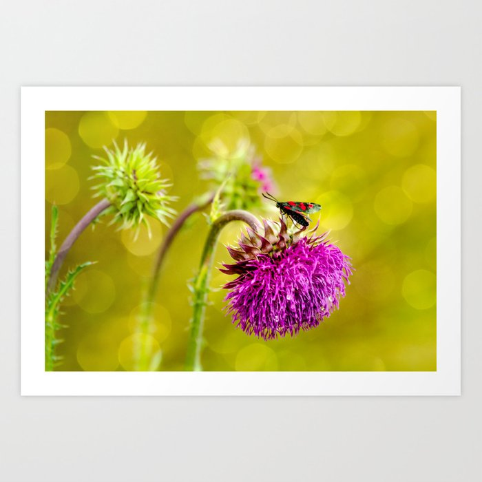 Butterfly and а thistle Art Print