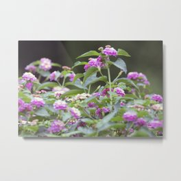 Longwood Gardens Autumn Series 144 Metal Print