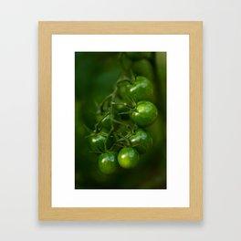 Green Tomatoes Framed Art Print
