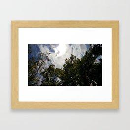 Falcon Flies Overhead Framed Art Print