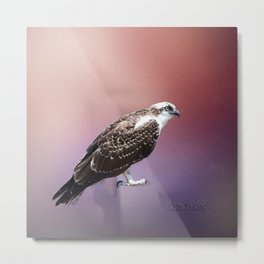 Osprey Perched Metal Print