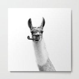 Mr llama Metal Print