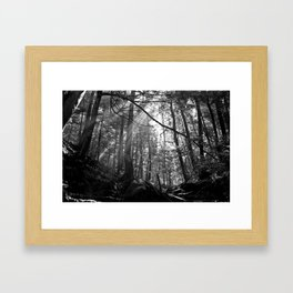 Sunrays Through the Trees Framed Art Print