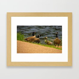 Duck Meeting with Geese Framed Art Print