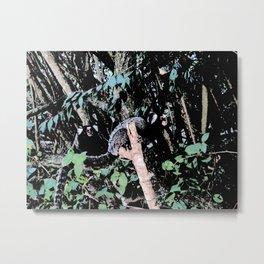 Common marmoset Metal Print