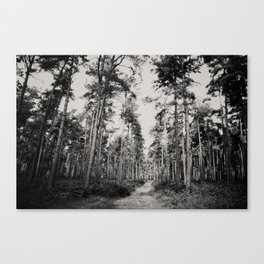 the path through the forest ... Canvas Print