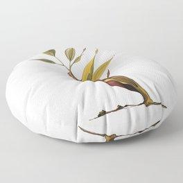 Ficus Microcarpa Bonsai Floor Pillow