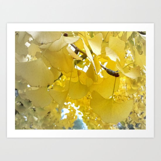 Ginko Tree Art Print