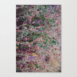 Australian Wildflowers Canvas Print
