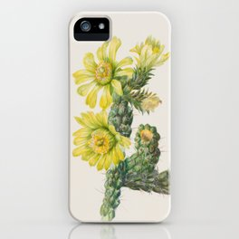 Cholla Opuntia Whipplei Cactus Botanical Print, Mary Vaux Walcott iPhone Case