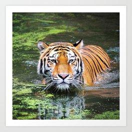 Tiger | Tigre Art Print