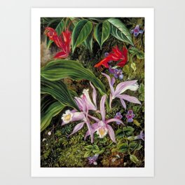 Tropical Wildflowers, Birds of Paradise and Orchids still life painting Art Print