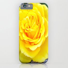 Golden Yellow Rose with Garden Background iPhone Case