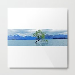 AllenbyArt That Wanaka Tree Landscape Scenery of Lough, Photography,  Metal Print