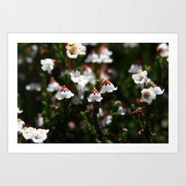 California Flowers  Art Print