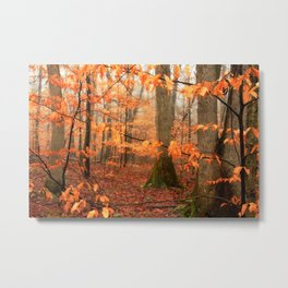 Mystic Autumn Forest Metal Print