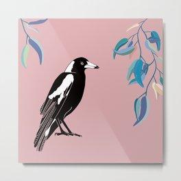 Australian Magpie on Pink Metal Print