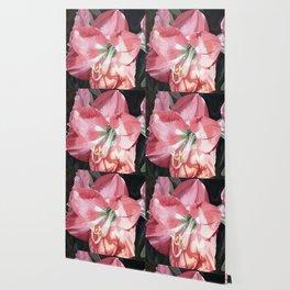 Pink Amaryllis Watercolor Botanical Garden Flower Painting Nature Art Wallpaper