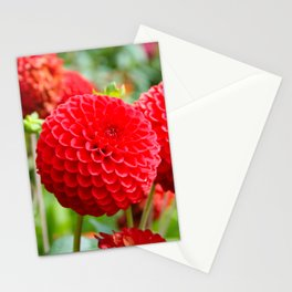 Red Dahlias in the Summer Stationery Cards