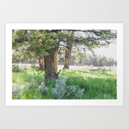 Trees in Yellowstone Art Print