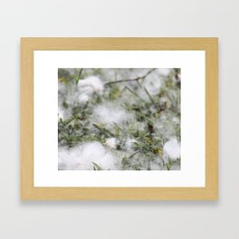 Cotton or snow Framed Art Print