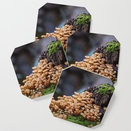 Mushroom Forest Coaster