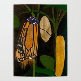 Butterfly Metamorphosis Poster