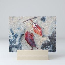 Coralline algae and dead leaf on sand Mini Art Print