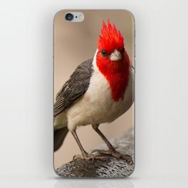Red Crested Cardinal iPhone Skin