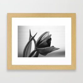 Tulip Blooming In Black And White Framed Art Print