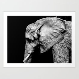Elephant Portrait BW Art Print